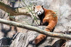180323 National Zoological Park-02.jpg (Bruce Batten) Tags: shadows locations terrestrial plants trips occasions zoos subjects mammals nationalzoologicalpark animals vertebrates businessresearchtrips washingtondc usa washington districtofcolumbia unitedstates us