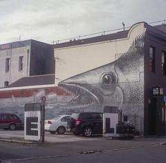 City Fish (BunnySafari) Tags: film yashica124g fujifilm400 dunedin nz fish fpp wandering twinlens