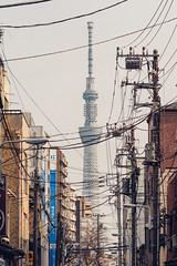 SKYTREE|晴空塔 (里卡豆) Tags: arakawaku tōkyōto 日本 jp penf olympus 75mm f18 神之光 olympus75mmf18 city