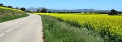 Koolzaad (Meino NL) Tags: koolzaad rapeseed montgrí catalunya catalonië españa spanje costabrava spring