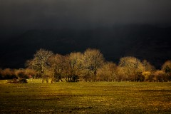 The storm is coming! (Christine Padmore) Tags: powerful mature golden trees sky dark storm