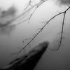 Riverside Overhang 005 (noahbw) Tags: captaindanielwrightwoods d5000 desplainesriver dof nikon abstract blackwhite blackandwhite blur branches bw depthoffield forest landscape log minimal minimalism monochrome natural noahbw quiet river silhouette spring square still stillness water woods