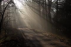 Tilburg - Oude Rielsebaan (Grotevriendelijkereus) Tags: tilburg forest bos woud wood path pad road weg noord brabant netherlands nederland holland sunrise fog mist foggy morning ochtend