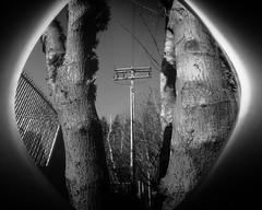 cookieCanPinhole-J-396 (device9) Tags: pinhole cookiecancamera bw blackandwhite analog analogue papernegative light shadow contrast monochrome water forest wood tree