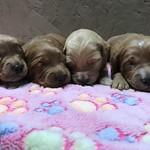 Jesse Jax's 6 girls and 5 boys !