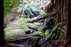 Bridge on the Tolkien track (Wintrmute) Tags: styx tasmania australia au tolkien track