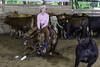 June 7 2015 - AQHA/NCHA Days 2. (dc2photo) Tags: ocha cow cutting equine horse sports western