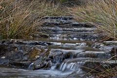 Escaleras (explore 241) (pascual 53) Tags: canon 1dmarkiii 50mm xabi munilla larioja juncos agua arroyo