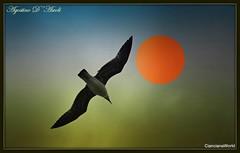 W LA LIBERTA'!!!... - Marzo-2018 (agostinodascoli) Tags: libertà nikon nikkor sciacca sicilia agostinodascoli texture gabbiano sole cielo colore fullcolor uccelli nature creative art digitalart photoshop