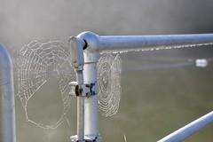 Cataract Falls (Tripawd) Tags: nature cataractfalls mounttamalpais webs spiderwebs