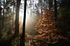 Plaisir d'automne (Excalibur67) Tags: nikon d750 sigma globalvision 24105f4dgoshsma paysage landscape nature forest foréts arbres trees vosgesdunord lumière automne autumn