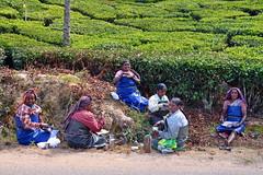 India - Kerala - Munnar - Tea Plantagen - Taking Rest (asienman) Tags: india kerala munnar teaplantagen asienmanphotography