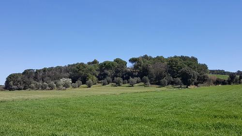 Puig d'en Roura - Forallac