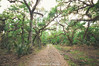 Brumley Rd Trailhead (J. Parker Natural Florida Photographer) Tags: bronsonstateforest centralflorida chuluota florida littlebigeconstateforest seminolecounty hike hiking landscape naturalbeauty nature outdoor scenic trail forestroad hardwood hammock woods forest trees oak path