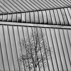IMG_6118 (Kathi Huidobro) Tags: london blackwhite bw monochrome patterns tree closeup architecturaldetail lines texture contrast roof architecture