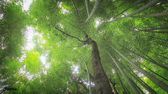Sagano Bamboo Forest (cattan2011) Tags: 京都 nationalpark bamboo forests woodlands traveltuesday travelphotography travelbloggers travel naturelovers natureperfection naturephotography nature landscapephotography landscape 日本 naganobambooforest kyoto japan