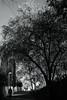 spring appearance 3 (Amselchen) Tags: mono monochrome bnw blackandwhite flower light shadow shade people pedestrian park sky seasonspring sony a7rii alpha7rm2 leica leicarlens macroelmaritr60mm