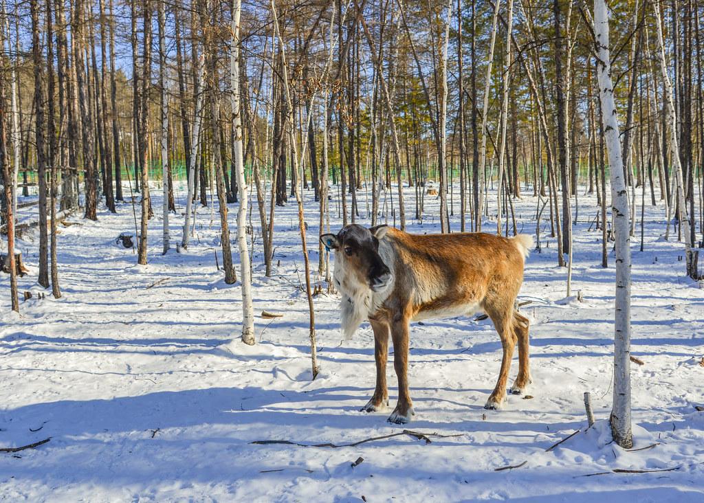 Indoor Dog Park Red Deer