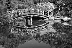 A tranquil walk in the early morning (PeterThoeny) Tags: saratoga california siliconvalley sanfranciscobay sanfranciscobayarea southbay hakonegardens japanesegarden garden park tree bridge woodbridge arch archbridge pond reflection water waterreflection wave ripples morning day monochrome blackandwhite sony sonya7 a7 a7ii a7mii alpha7mii ilce7m2 fullframe vintagelens dreamlens canon50mmf095 canon 1xp raw photomatix hdr qualityhdr qualityhdrphotography fav200