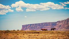 Hopi Heat (Clint Everett) Tags: landscape nature sky rocks desert wild west arizona heat hopireservation horses spring clouds