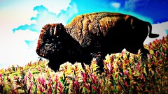 Furious (WILD4nimal.) Tags: far cry 5 bison