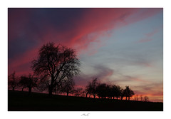 Children Listening to the Old (Max Angelsburger) Tags: saharadust sunset red purple deep blue sky spring silhouette tree story telling school colorful warm dreamy april 2018 niefern öschelbronn enzkreis badenwuerttemberg germany europe earth