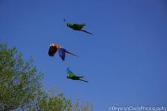 DSC_1209 (deveronclarijs) Tags: animals animal blijdorp dierentuin dieren dier diergaarde d5300 nederland nl nikon nikond5300 rotterdam zoo bird birds vogel vogels