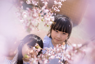 Little sisters looking at cherry blossoms