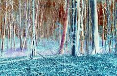 Woodlot - HSS (Daryll90ca) Tags: sliderssunday hss wodlot trees forest bush