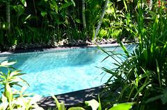 Sandi Agung Villa Private Pool 2 (itchypaws) Tags: northkuta bali indonesia id sandi agung villas seminyak villa swimming pool 2017 vacation holiday asia island