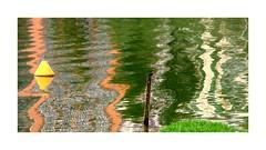 Lago colorido (o.dirce) Tags: folhaseca planta odirce lago colorida