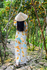 A Vietnamese woman in traditional dress (phuong.sg@gmail.com) Tags: agriculture aodai asia asian background citrus conical country countryside cultivate day delta dress farm farmer farming field fresh golden green grow hat job labor land landscape mandarin mekong nature outdoor people person plant plantation rural scenery season southeast spring summer sunny traditional tree tropical vietnam view work worker yellow