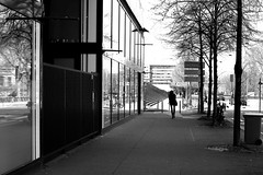 Walking along trees (pascalcolin1) Tags: paris13 femme woman arbres trees lumière light vitres windows reflets reflection photoderue streetview urbanarte noiretblanc blackandwhite photopascalcolin 5omm canon50mm canon
