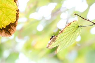 Leaf it Behind