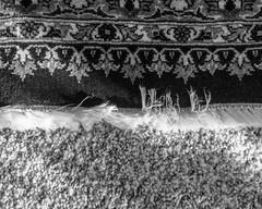 IMGP1893 (agianelo) Tags: wool rug carpet monochrome bw blackandwhite