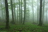 Looking Back (Hector Prada) Tags: bosque niebla bruma primavera musgo hojas hayedo atmósfera encantado forest fog mist spring moss leaves mood enchanted creepy charmed naturaleza nature paísvasco basquecountry