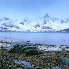 A trio from Lofoten - Velvia 50 (magnus.joensson) Tags: scandinavia norway norwegian lofoten sea seascape snow hasselblad 500cm zeiss distagon 50mm cf fle fuji velvia 50 e6 6x6