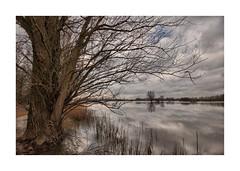 IMG_9776 TK (cees van gastel) Tags: ceesvangastel canoneos550d sigma1020mm landschap landscape nature natuur water skies luchten trees bomen nederland netherlands waardenvanloevestein gelderland wolken clouds