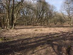 Strubbenbos (Jeroen Hillenga) Tags: strubben bos kniphorstbos drenthe netherlands nederland natuur nature natuurgebied natur heide landscape landschap
