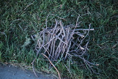 25Mar2018-IMG_2610 (aaron_anderer) Tags: 2018 twigs