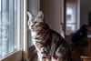 _NCL3355-Edit (chitoroid) Tags: nikond750 nikkor50mmf18g japan hokkaido sapporo cat