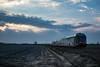 TRENORD - FERRERA LOMELLINA (Giovanni Grasso 71) Tags: atr gtw stadler lomellina ferrera nikon d610 giovanni grasso tramonta