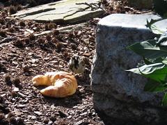 00773784 Berliner Zoo 1 (golli43) Tags: berlin zoo charlottenburg bahnhofzoo city animals tiere plants artenpflege artenvielfalt pflanzen zoologischer garten tierehintergittern pflanzenpflege baustelle