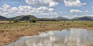Pilanesberg landscape