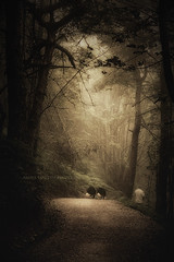 """There are not strangers here..."" (Ilargia64) Tags: nature forest dark darkness friendship caminodesantiago spain amayasanchez"