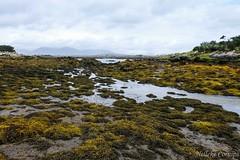 Low tide (Nelleke C) Tags: 2017 letterdyfehouse roundstone coast connemara countygalway holiday ierland ireland kust landscape landschap vakantie