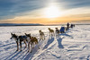 Resting in the middle of nowhere (Markus Trienke) Tags: traveling travel cold frozen ice snow winter huskies husky dogs mushing dog dogsledding nenana alaska usa us