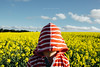 Canola field (Robert Lang Photography) Tags: achildwithheadcoveredbyhoodedsweatshirtjumperinacanolafield a child with head covered by hooded sweatshirt jumper canola field red yellow blue flower flowers cloud clouds outdoors outside stripes white clothing cover green farm rural horizontal colour color southaustralia stock sa eyrepeninsula ep robertlangphotography robertlang robertlangportlincoln robertlangaustralia wwwrobertlangcomau copyspace negativespace