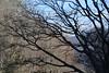 Blue Ridge Parkway View (esywlkr) Tags: brp nc wnc blueridgeparkway northcarolina nature trees silhouette