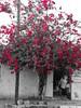 Primavera Floreciente (Isaac Palacio) Tags: street painting 2018 merida yucatan flickr latinamerica lady flora colorful